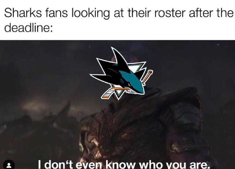 Sharks fans